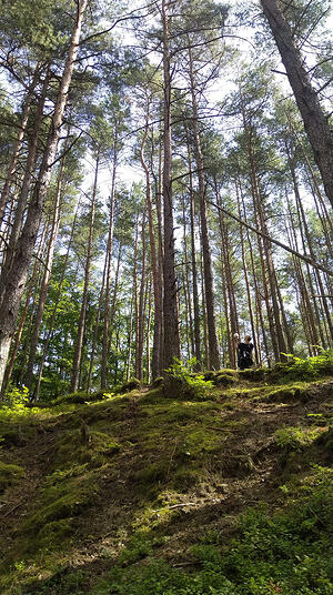 Natalia Mamcarczyk field recording in the forest